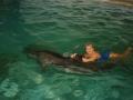 Дельфинотерапия. Крым