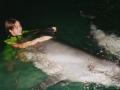 Татьяна Дороганич с дельфином