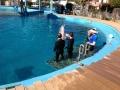 Семья плавает с дельфинами