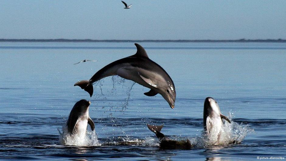describing the playful and clever sea animal the dolphin