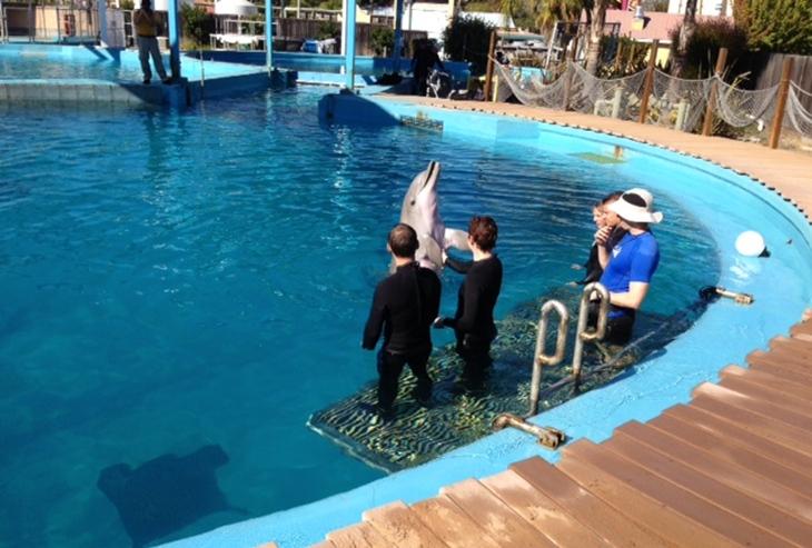 Калифорния. Семья плавает с дельфинами